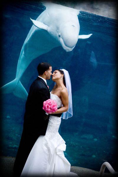 Mystic Aquarium Mystic CT 06355 Photos